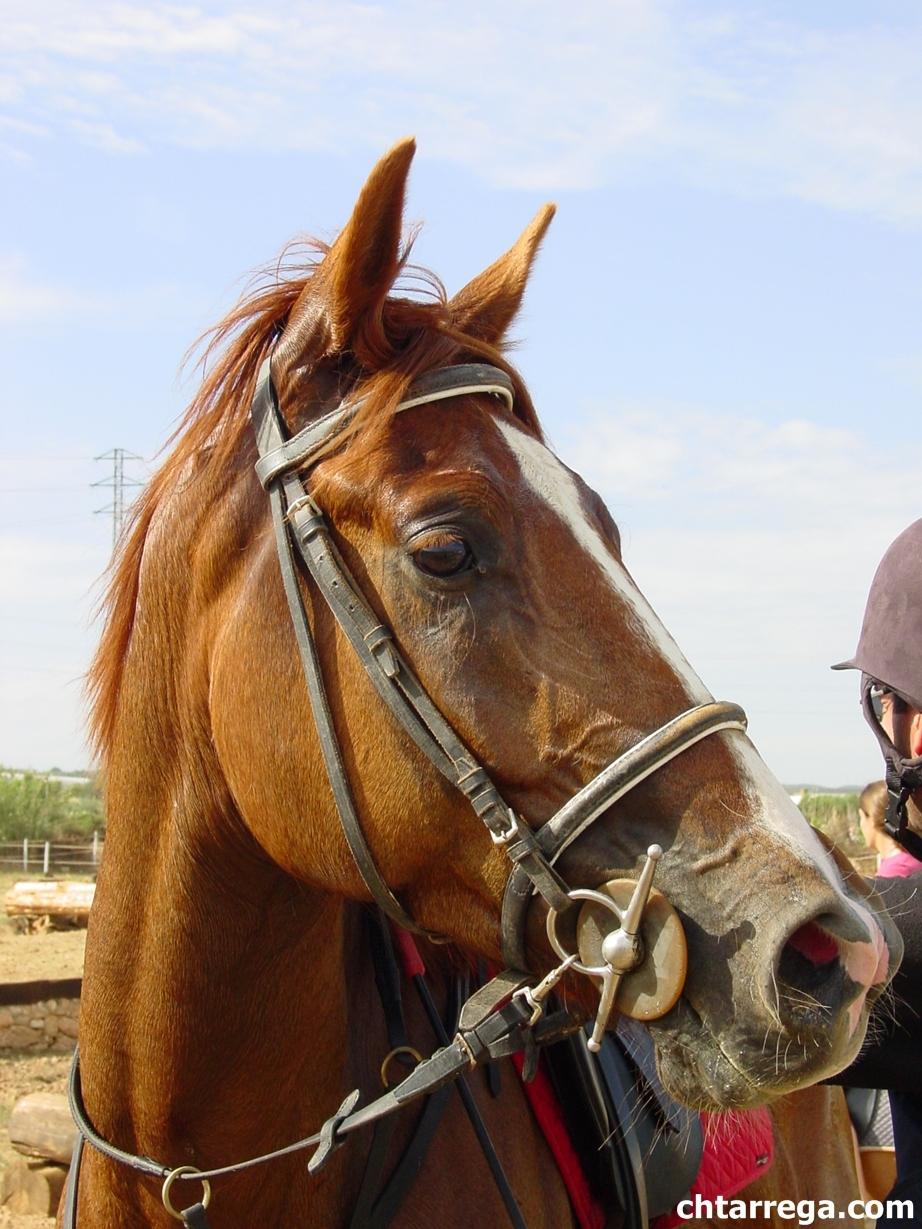 equitacio
